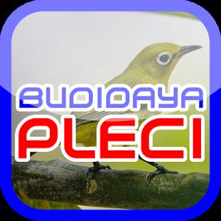 Cara Budidaya Pleci - náhled