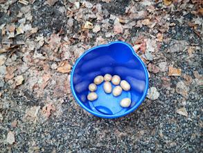 Photo: Zemiakové triafanie