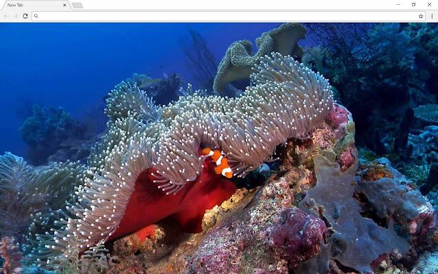 Underwater Ocean Pics & New Tab