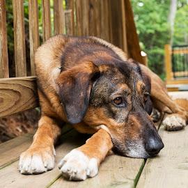 by Lori Rider - Animals - Dogs Portraits