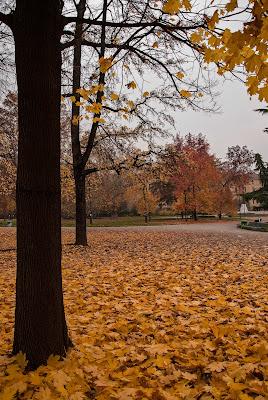 Parco d'autunno di laurafacchini