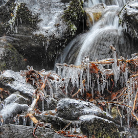 So Many Icicles by Patricia Phillips - Nature Up Close Water ( water ice icicles creeks alaska )