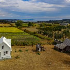 Newman Farm by Keith Sutherland - Uncategorized All Uncategorized ( field, farm, central saanich, saanichton, sunflowers, drone )