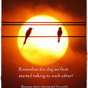 You & I by Akbar Ali Asif - Typography Captioned Photos ( relationship, love, pakistan, you and i, sunset, bee eaters, evening )