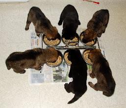 Photo: Noen valper er mer grådige enn andre, så nå får de hver sin porsjon, 4 uker og 2 dager