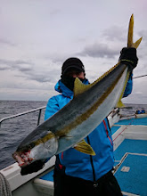 """Photo: おおーっ! """"ハマグチさん""""は皆がヤズ釣っている中、お見事、6kg近いヒラスキャッチでした! やったね!"""