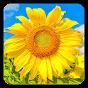 Golden Sunflower LWP icon