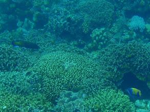 Photo: Siquijor Island Reef, Philippines