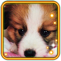 Cool Puppy Pet icon