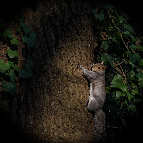 by Paul Foot - Animals Other Mammals