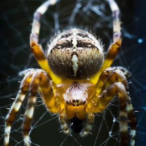by Luke Aylen - Animals Insects & Spiders