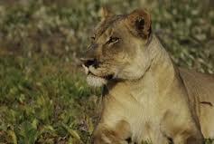 The Lion Queen (S2E6)