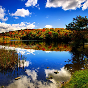 by Lyle Gallup - Landscapes Waterscapes ( , fall, color, colorful, nature, mood factory, vibrant, happiness, January, moods, emotions, inspiration, relax, tranquil, relaxing, tranquility, renewal, green, trees, forests, natural, scenic, meditation, the mood factory, mood, jade, revive, inspirational, earthly )