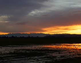 Photo: Sunset over the Olympic Mountains, from Fir Island, Skagit Valley, WA.