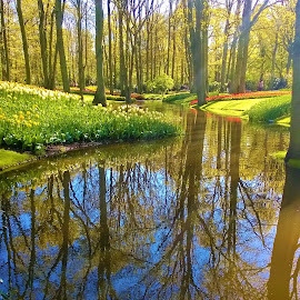 In a park_1 by Svetlana Saenkova - Instagram & Mobile Other ( water reflection, spring, springtime, keukenhof, park,  )