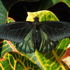 6-13-15 Butterfly Wonderland (9).JPG