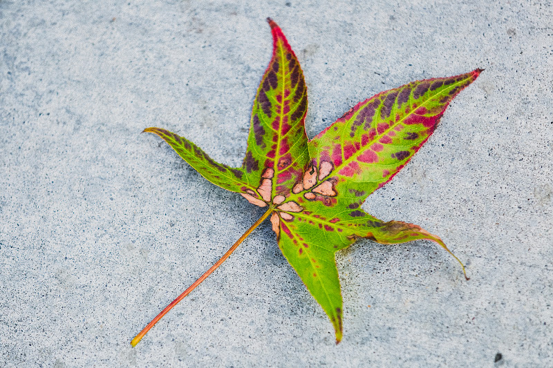 Photo: Autumn leaves go whirling past whispering winter is coming fast.