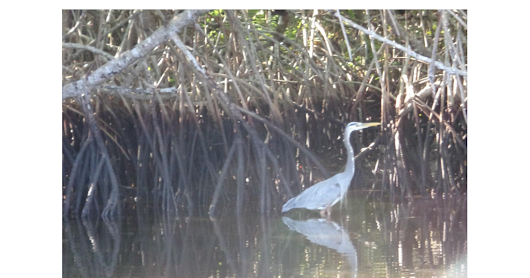 An Everglades Airboat Tours Guide Points Out Why this National Landmark is So Important.pdf - Google Drive