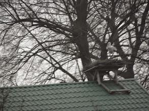 """Photo: Pierwszy Dzień Wiosny. Spotkany po drodze do Słońska bocian na bocianim gnieździe """"ustrzelony"""" z autokaru"""