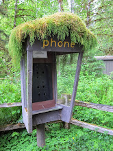 Photo: Phoneless phone booth with a mossy hat.