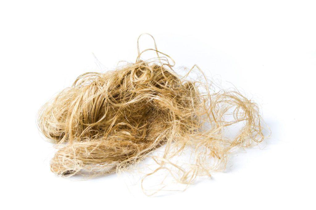 靭皮/繊維は麻の別の用途であり、植物の茎に由来します