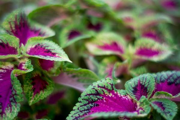 giardino bicolore di AZ_photos