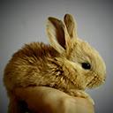 Cute Bunny Rabbit Wallpapers Theme New Tab