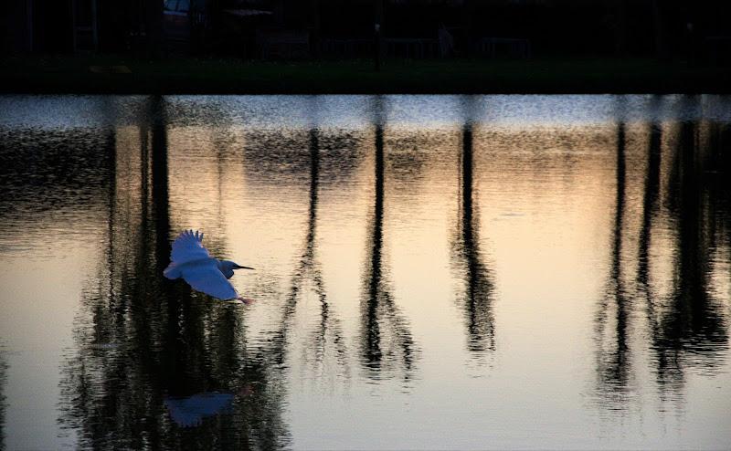 Nel silenzio del tramonto... di Lisola