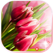 Pink Tulips Live Wallpaper Android APK Download Free By SweetMood