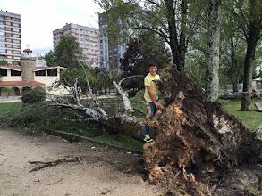 Photo: Chopo  Arrancado por un temporal 2015