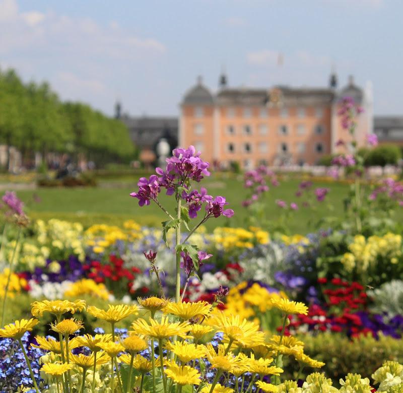 Nel bel mezzo della primavera di silvia_tamburini