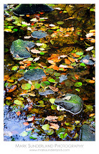 Photo: #FallFriday  Stones and Floating Leaves  As we're getting into late autumn I thought a shot of fallen leaves would be appropriate for Fall Friday, curated by +Karin Nelson and +Stephonie Ogden. These were captured a couple of years back on the edge of the River Nidd in the Nidd Gorge not far from where I live.  Canon EOS 5D, 24-105mm at 105mm, ISO 50, 2.5s at f22