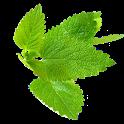 Şifalı Bitkiler (İnternetsiz) icon