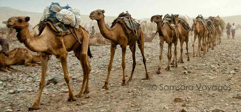 Photo: <fr>Tous les matins, les chameaux sont ammenÈs sur les sites d'extraction du sel</fr><en>Every morning, camels are bring to salt extraction sites</en>