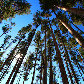 by Brandi Nichols - Nature Up Close Trees & Bushes ( nature, montana, yellowstone national park, trees, forest,  )