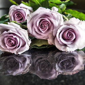 Purple roses 1 by Anita Berghoef - Flowers Flower Arangements ( rose, refelction, purple, nature, roses, nature up close, nature close up, four, flowers, flower,  )