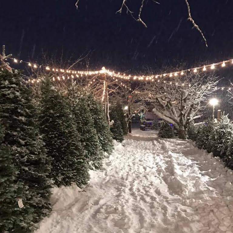 Green Ridge Christmas Trees Christmas Tree Farm In Kaysville