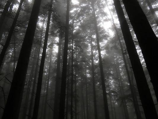 Il bosco misterioso di LucaMonego
