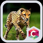 Wild Cheetah  Animal Theme HD  Icon