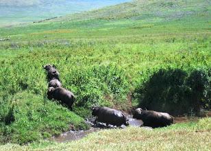 Photo: Pienimuotoista vaellusta (tosin ei mitään alueen varsinaiseen eläinten vaellukseen verrattuna)