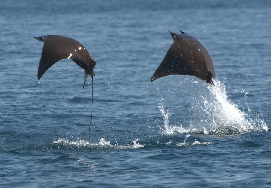 twingo by Antoni Murcia - Animals Sea Creatures
