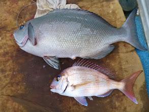 Photo: オナガと真鯛のコラボ!