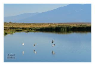 Photo: Eastern Sierras-20120715-89