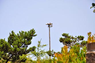 Photo: osprey nest