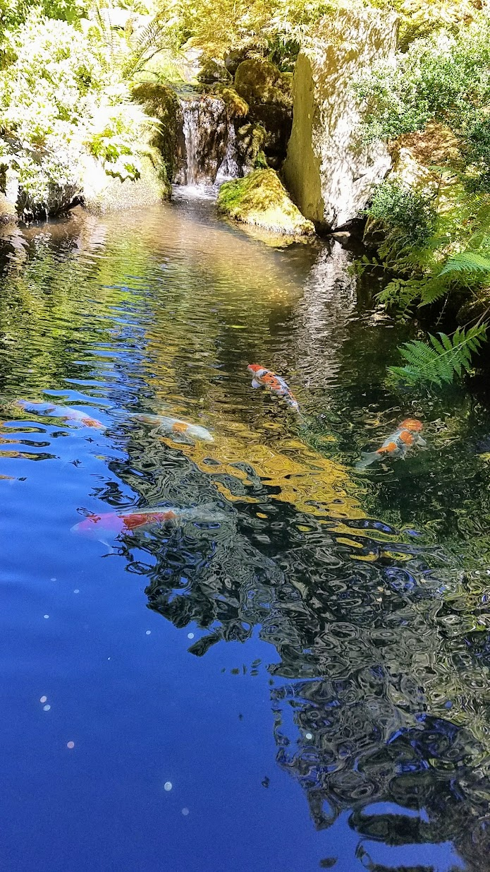 Visiting the Portland Japanese Garden - Strolling Pond Gardens. Area with the Koi.
