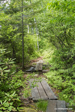 Photo: Trail made with wooden slabs at Kettle Poind State Park by Karalyn Mark