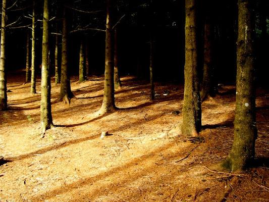 Luce nel bosco di Bestiaccia