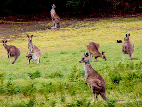 Photo: Year 2 Day 148 -  Mum and Joey and Friends