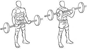 Curl barre musculation des biceps