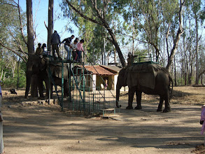 Photo: Excited youngsters riding on elephants at Kabini
